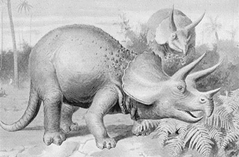 Two triceratops