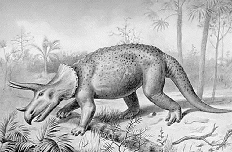 A triceratops and vegetation